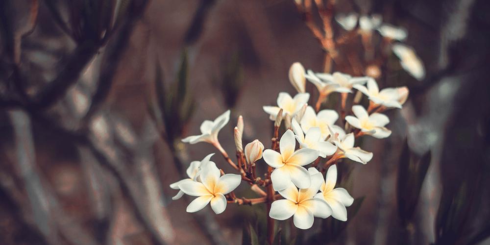 New EMV Technology Helps Texas Jasmine 'Bloom'